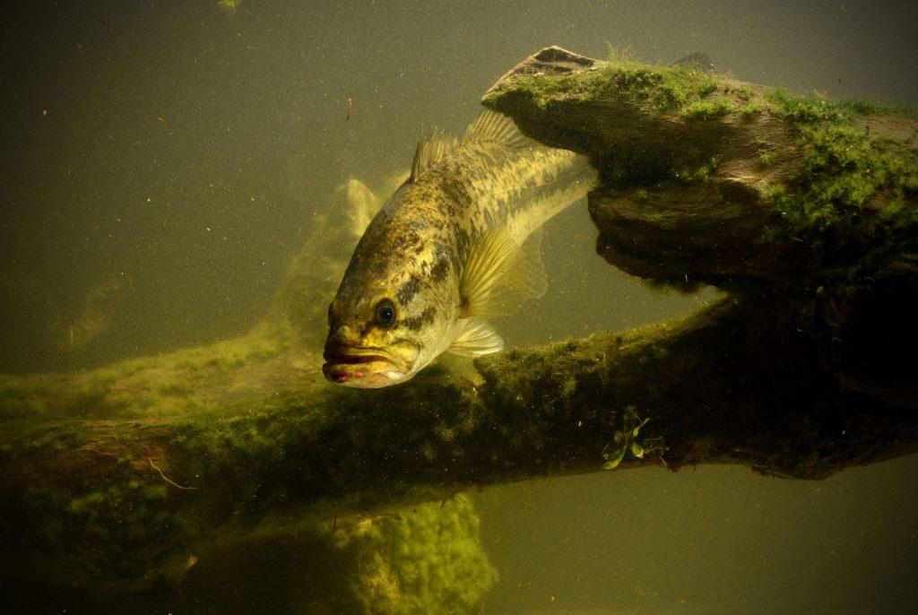 Largemouthbass Fishing Lures