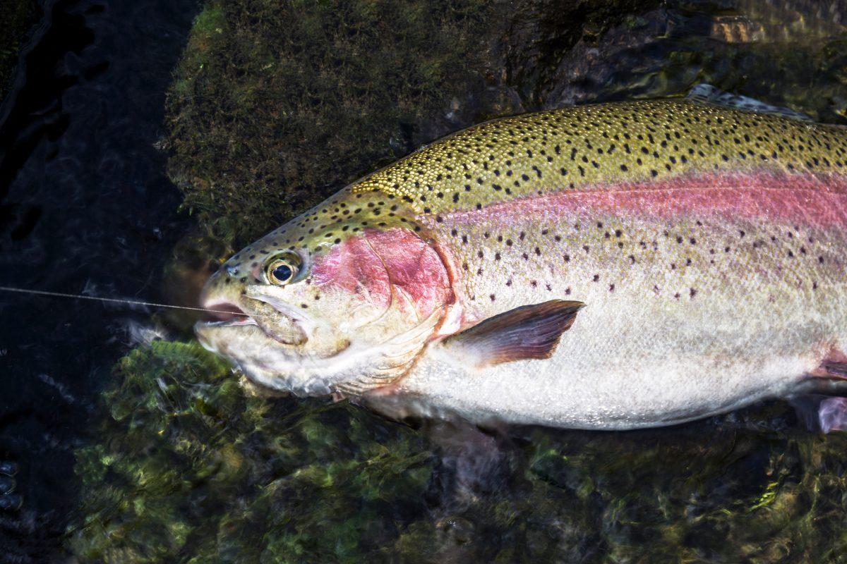 Best Trout Fishing Spots